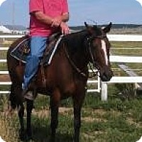 Adopt A Pet :: Lizzy TB Mare - Black Forest, CO