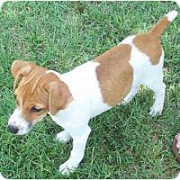 Adopt A Pet :: NOMEE - Phoenix, AZ