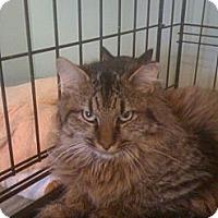 Adopt A Pet :: Deacon - Monroe, GA