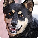 Adopt A Pet :: Lilian von Lindo