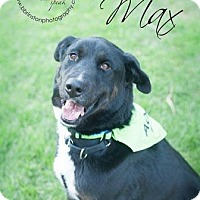 Adopt A Pet :: Maxwell Gregory - Burbank, CA