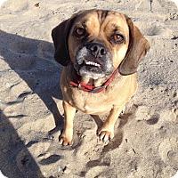 Adopt A Pet :: Chloe - Anaheim, CA