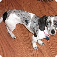 Adopt A Pet :: Jasmine-pending adoption - Omaha, NE