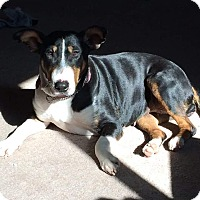 Adopt A Pet :: Mackenzie - Glenwood, AR