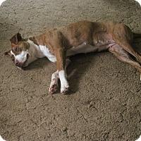 Adopt A Pet :: Sophie - Albert Lea, MN