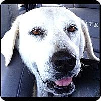 Adopt A Pet :: Aloe - Johnson City, TX