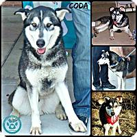 Adopt A Pet :: Coda - Kimberton, PA
