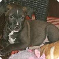 Adopt A Pet :: Manny - Marlton, NJ