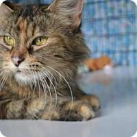 Adopt A Pet :: Sanchez - Edwardsville, IL