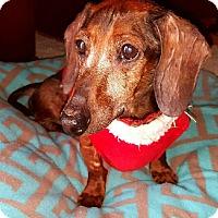 Adopt A Pet :: Doc - Decatur, GA