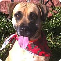 Adopt A Pet :: Maya - Foster Care - Oxford, MS