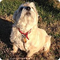 Adopt A Pet :: JAMES IN KS - Topeka, KS