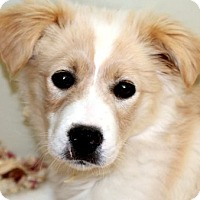 Adopt A Pet :: CHUBBS(GORGEOUS PUPPY!!) - Wakefield, RI