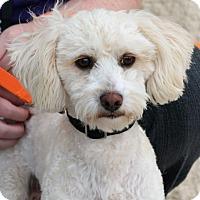 Adopt A Pet :: Larry - Palmdale, CA