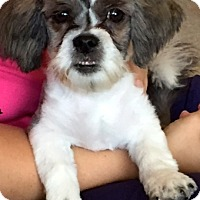 Adopt A Pet :: Cute little Dude!! - Ft Myers Beach, FL