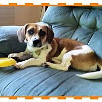 Adopt A Pet :: Princess 15 pounds! - Genoa City, WI