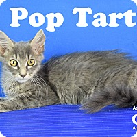 Adopt A Pet :: Pop Tart - Carencro, LA