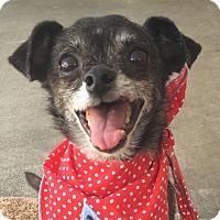 Adopt A Pet :: Jake *The Cutie Patootie* - Canoga Park, CA