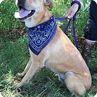 Adopt A Pet :: Austin - Kaufman, TX