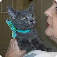 Adopt A Pet :: Twilight - Picayune, MS