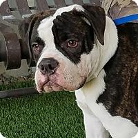 Adopt A Pet :: BUFORD - Gustine, CA