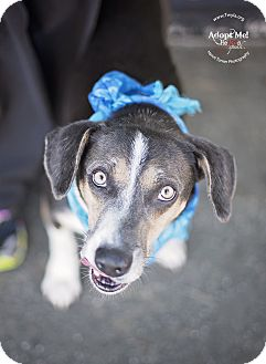 Beagle/Hound (Unknown Type) Mix Dog for adoption in Kingwood, Texas - Buford