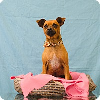 Adopt A Pet :: FRECKLES - Poteau, OK
