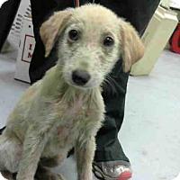 Adopt A Pet :: A278757 - Conroe, TX