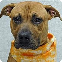 Adopt A Pet :: Bruno - Topeka, KS