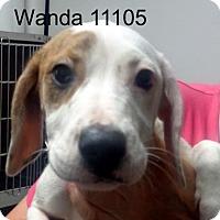 Adopt A Pet :: Wanda - Alexandria, VA