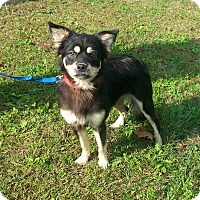 Adopt A Pet :: May West - Shinnston, WV
