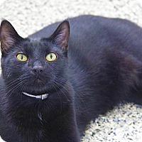 Adopt A Pet :: Shadow - Hawthorne, CA