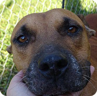 Terrier (Unknown Type, Medium) Mix Dog for adoption in Brooksville, Florida - LUNA