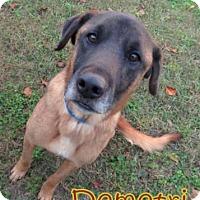 Adopt A Pet :: Demetri - Georgetown, SC