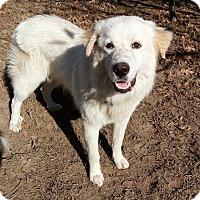 Adopt A Pet :: Wrangler - Kiowa, OK