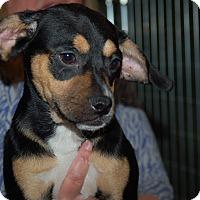 Adopt A Pet :: Penelope - Lebanon, TN