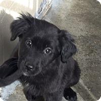 Adopt A Pet :: Tessa - Sagaponack, NY