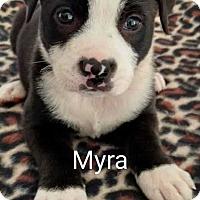 Adopt A Pet :: Myra - Thompson, PA