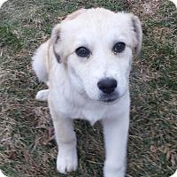Adopt A Pet :: Minnie Mae - Salt Lake City, UT