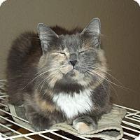 Calico Cat for adoption in Mesa, Arizona - Stella