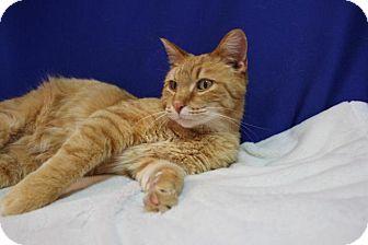 Midland Cat Adoption