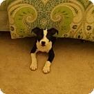 Adopt A Pet :: Lucky (COURTESY POST)
