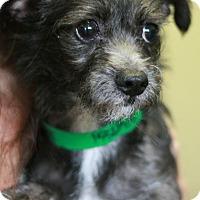 Adopt A Pet :: Faline - Canoga Park, CA