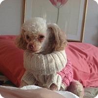 Adopt A Pet :: Tiny - Long Beach, NY
