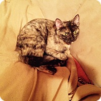 Adopt A Pet :: Autumn - East Meadow, NY