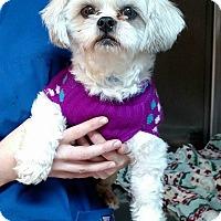 Adopt A Pet :: JT $300 - Seneca, SC