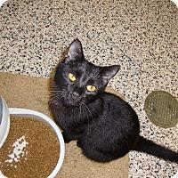 Adopt A Pet :: Birch - Aiken, SC
