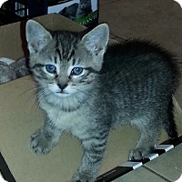 Adopt A Pet :: River - River Edge, NJ