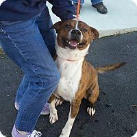 Adopt A Pet :: GOTTI - middle island, NY