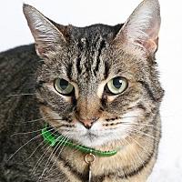 Adopt A Pet :: Sophie - Roseville, CA